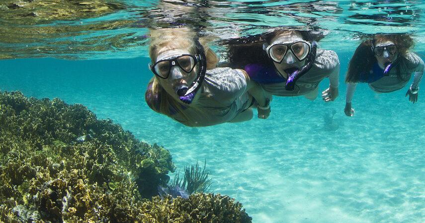 Aqua Lung snorkels